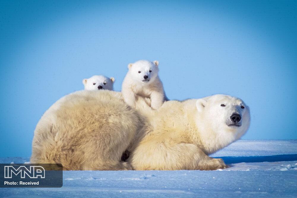 هشدار صندوق جهانی طبیعت درباره زوال کم سابقه حیوانات وحشی و آینده بشر