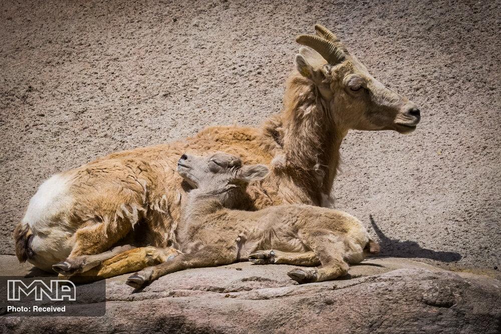 سرنوشت تلخ حیوانات در باغ وحش جیزه