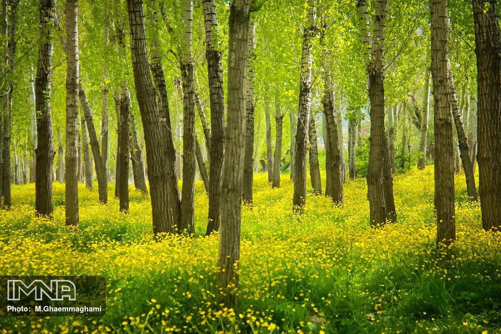 طبیعت بهاری سمیرم