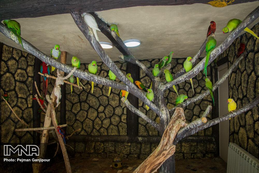 باغ پرندگان قم به زودی بازگشایی میشود
