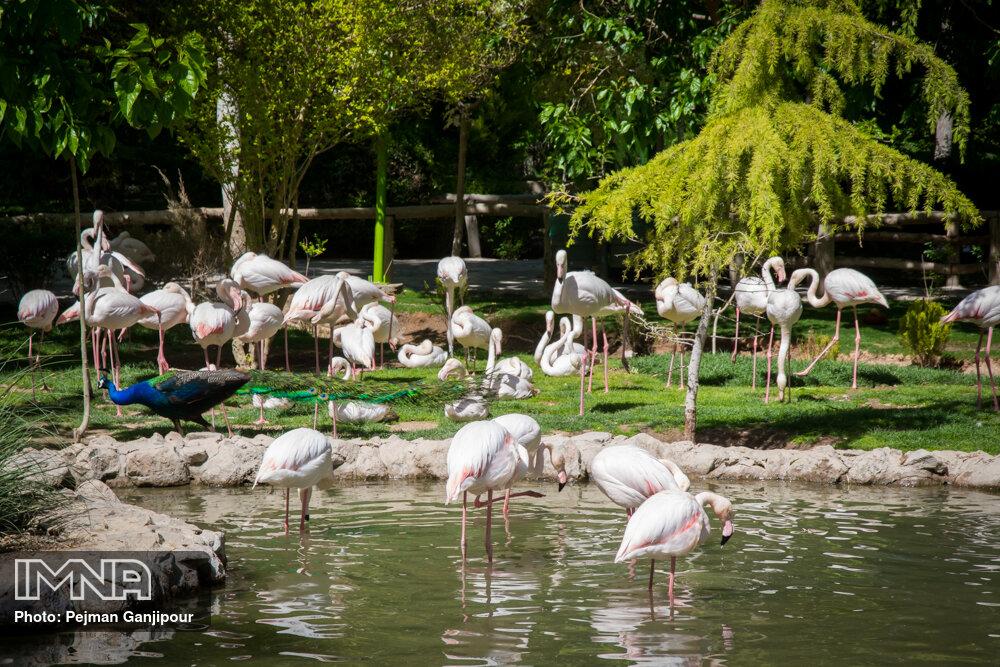 اطلس جامع باغ پرندگان اصفهان رونمایی می شود
