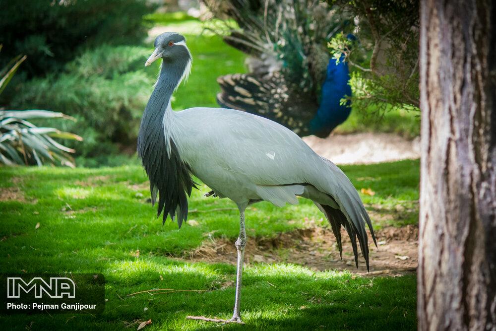 باغ پرندگان بندرعباس بازگشایی میشود