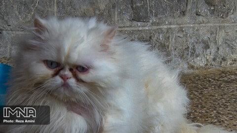 پرسش هشتم: آیا وجود یک نقاهتگاه حیوانات در اصفهان ضروری است؟