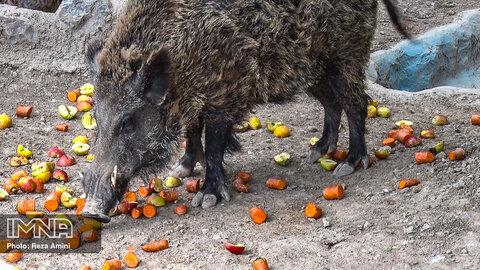 پرسش نهم: ادامه حیات بهتر حیوانات در باغ وحش صفه چگونه میسر می شود؟