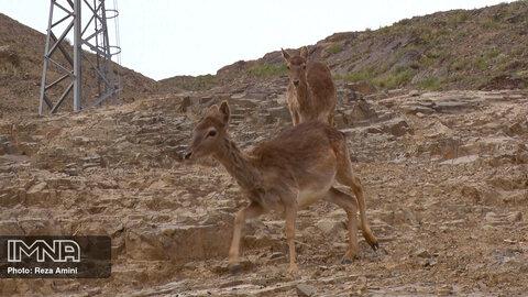 پرسش دوازدهم: باغ وحش  صفه چه فرصت هایی را ایجاد می کند؟