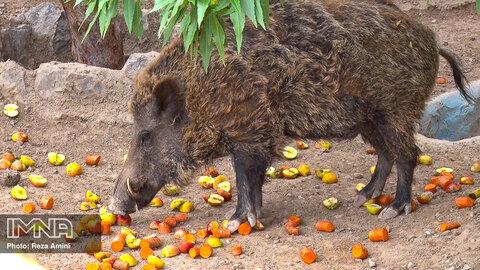 پرسش پنجم: باغ وحش های پیشرفته چه شرایطی دارند؟