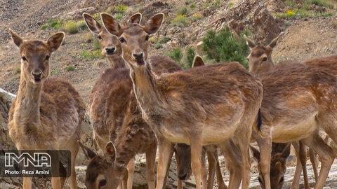 پرسش چهارم: تعطیلی باغ وحش چه زمانی باید انجام شود؟