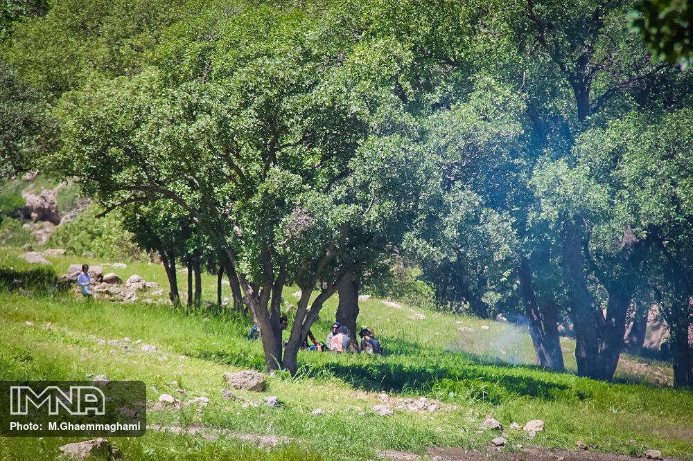 استفاده از ظرفیت همیاران طبیعت در پیشگیری از حریق جنگلها و مراتع