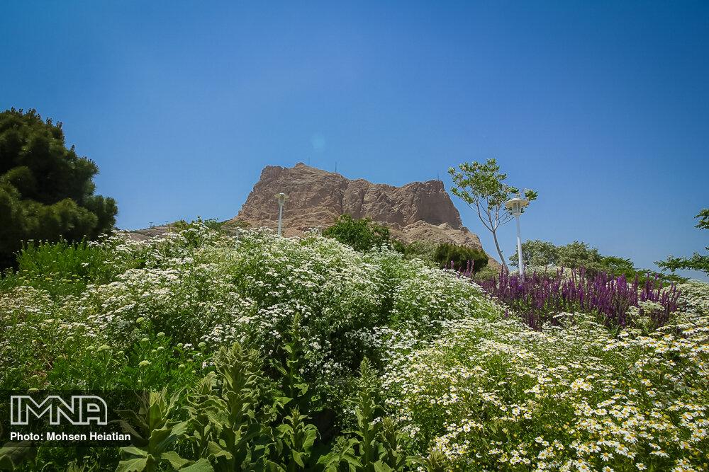 توسعه کاشت گیاهان بومی در ارتفاعات مشهد