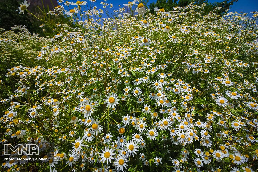 تقسیم گیاهان مثمر و غیر مثمر علمی نیست