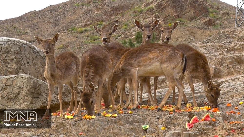 Isfahan taken huge step toward wildlife conservation