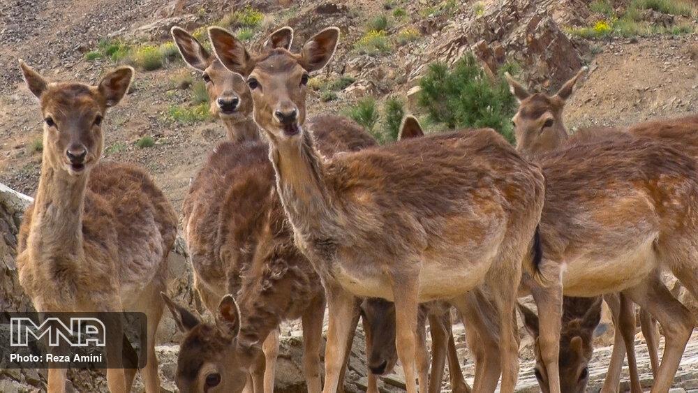 واکسیناسیون حیوانات پارک وحش اراک انجام شد