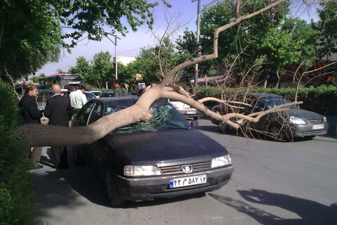 سقوط درخت بر روی خودرو به دلیل وزش باد شدید