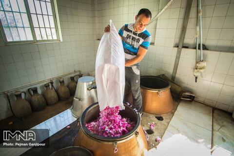 Redolent tradition of distilling Damask roses