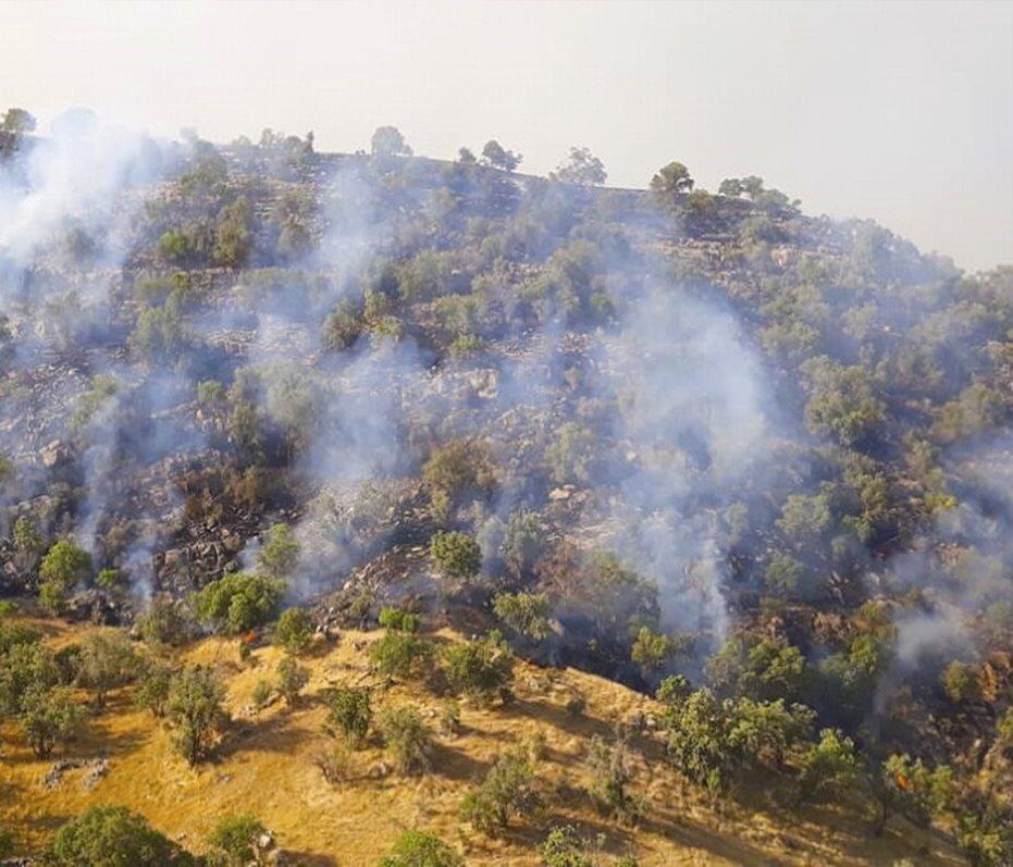 مهار کامل حریق در کوه خائیز/ ۴۰ هکتار از جنگل های زاگرسی در آتش سوخت
