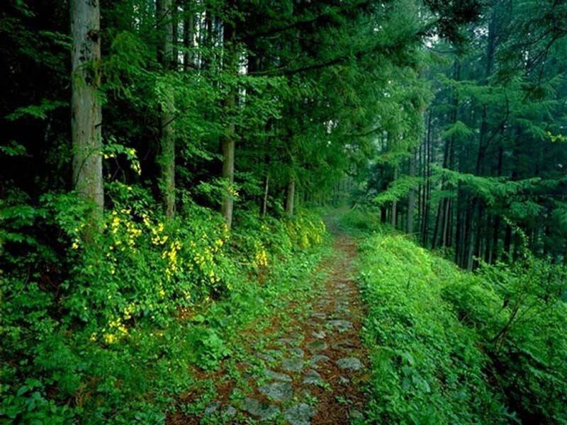 قبرستان طبیعی؛ طرح یک استرالیایی برای احیای جنگل ها