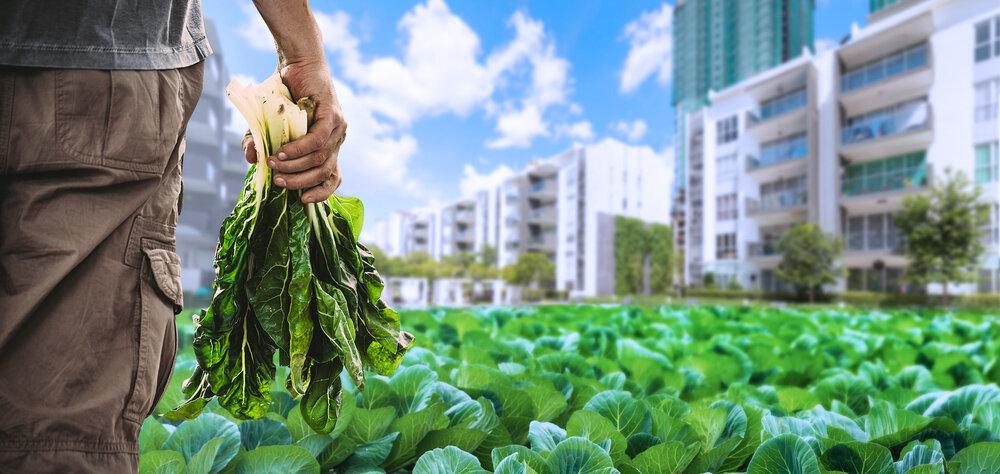 ظرفیتهای گردشگری کشاورزی شهری چیست؟