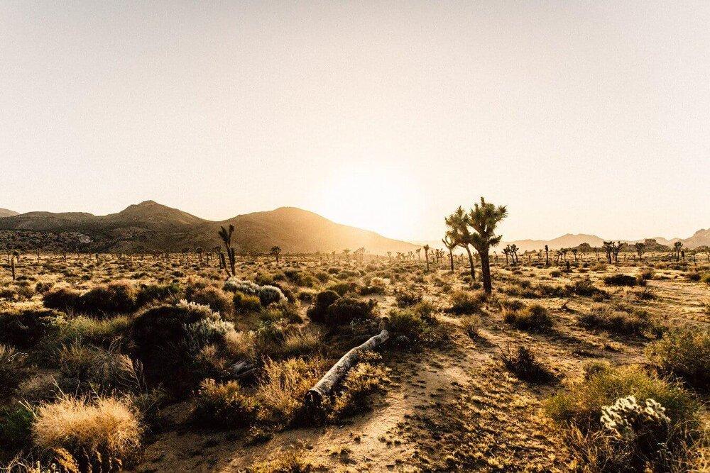 گرد و غبار مهمترین نشانه بیابانزایی/ سالانه یک میلیون هکتار از اراضی کشور بیابانی میشود
