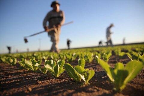 کشاورزان در برابر شوکهای کلان اقتصادی حمایت شوند