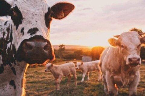 دولت با قیمت وارداتی از منابع داخلی گوشت خریداری کند