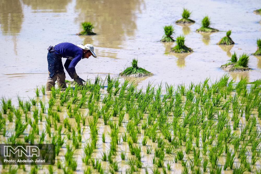 پیشبینی تولید ۱۲۸ میلیون تن محصولات کشاورزی در سال جاری