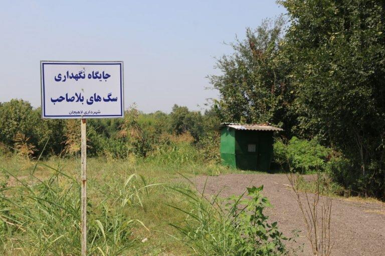 جمع آوری ۴۷ قلاده سگ بدون صاحب در لاهیجان