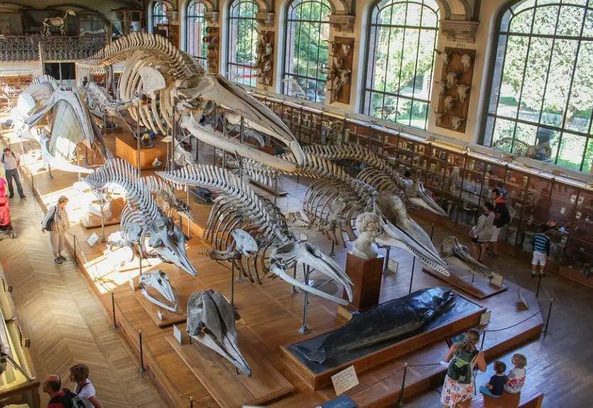 دیدنیترین موزههای تاریخ طبیعی جهان