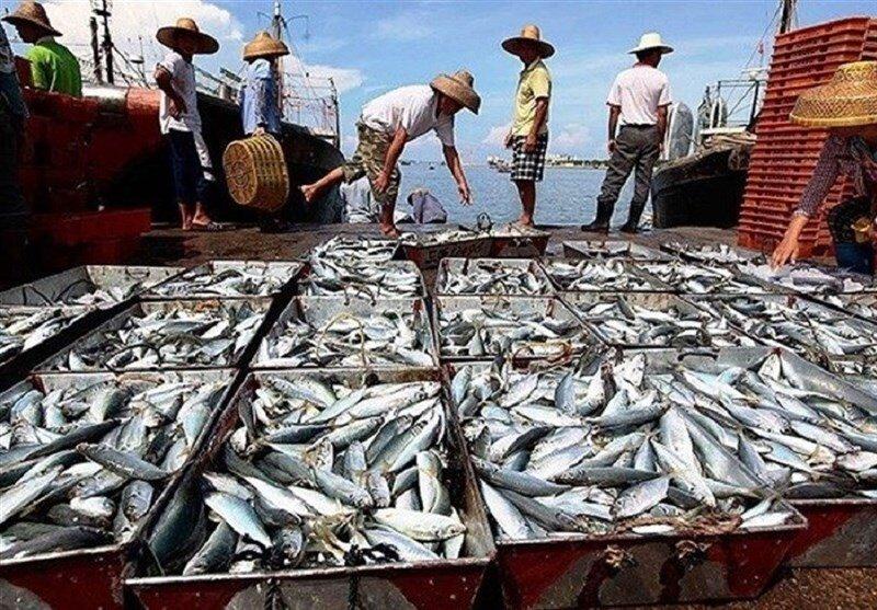 سازوکار اجرایی طرح خرید توافقی ماهی تدوین میشود