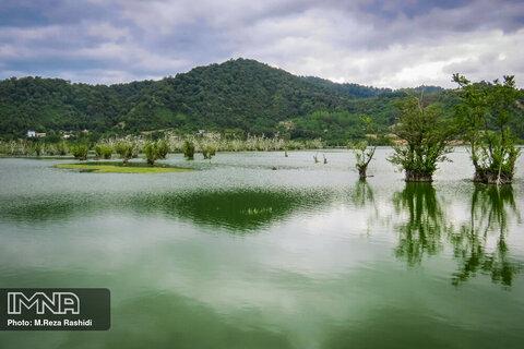 Visit Estil Lagoon, where trees walk