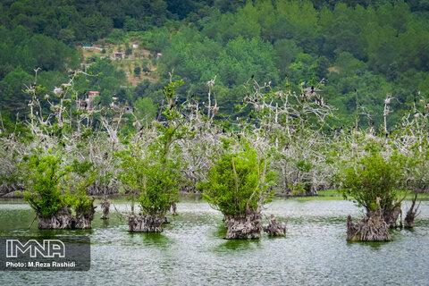طبیعت تابستانی تالاب استیل آستارا