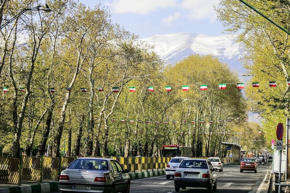 کاشت ۳ هزار چنار جوان در خیابان ولیعصر تهران