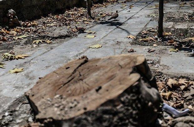 اظهار بیاطلاعی شهرداری کرج از قطع درختان دانشکده کشاورزی