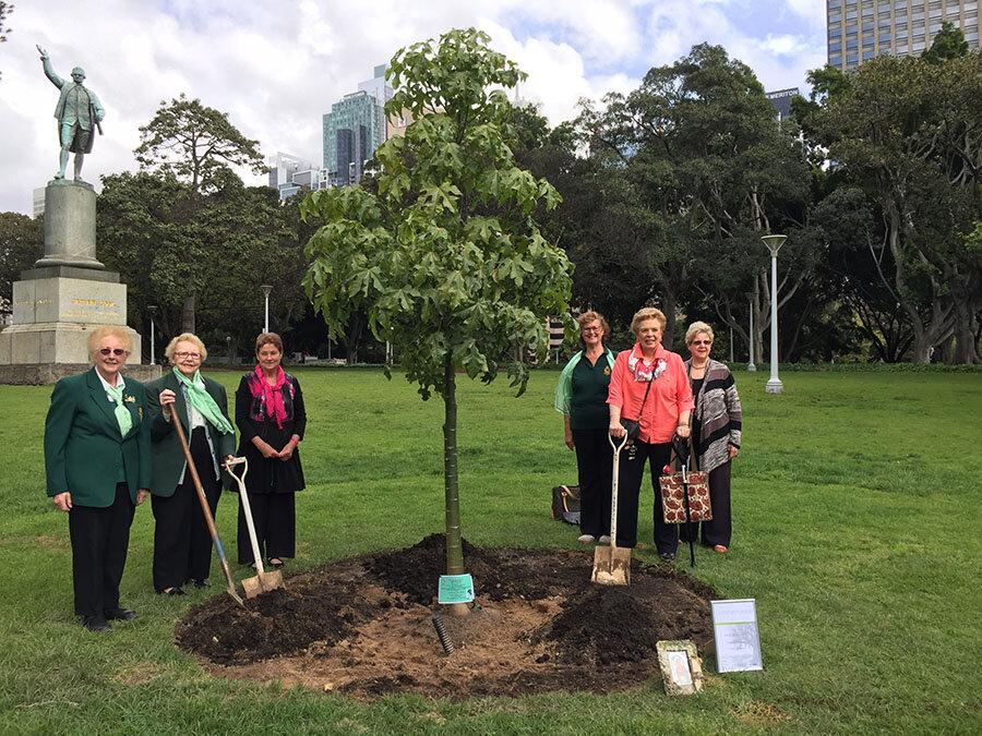پایتخت اسلواکی میزبان ۱۰ هزار درخت جدید