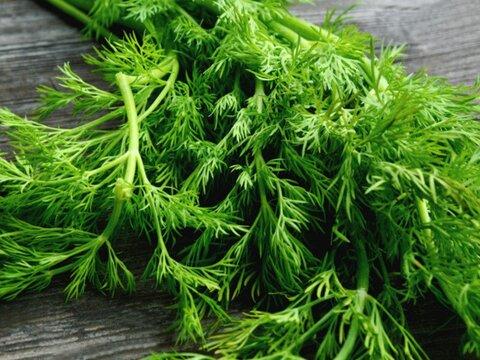 درمان افسردگی با گیاه شوید