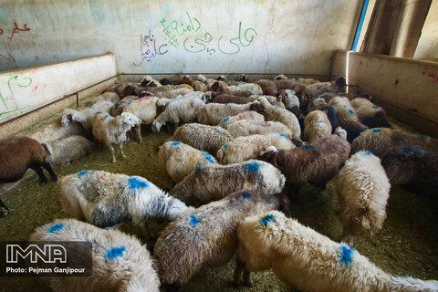 خرید اینترنتی دام و پرهیز از برگزاری مراسم در عید قربان