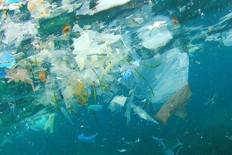 آلودگی میکروپلاستیکی باعث ناباروری میشود