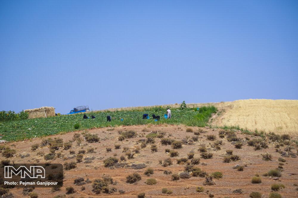کمبود آب ۱۲ هزار هکتار زمین کشاورزی گلپایگان را لمیزرع کرده است