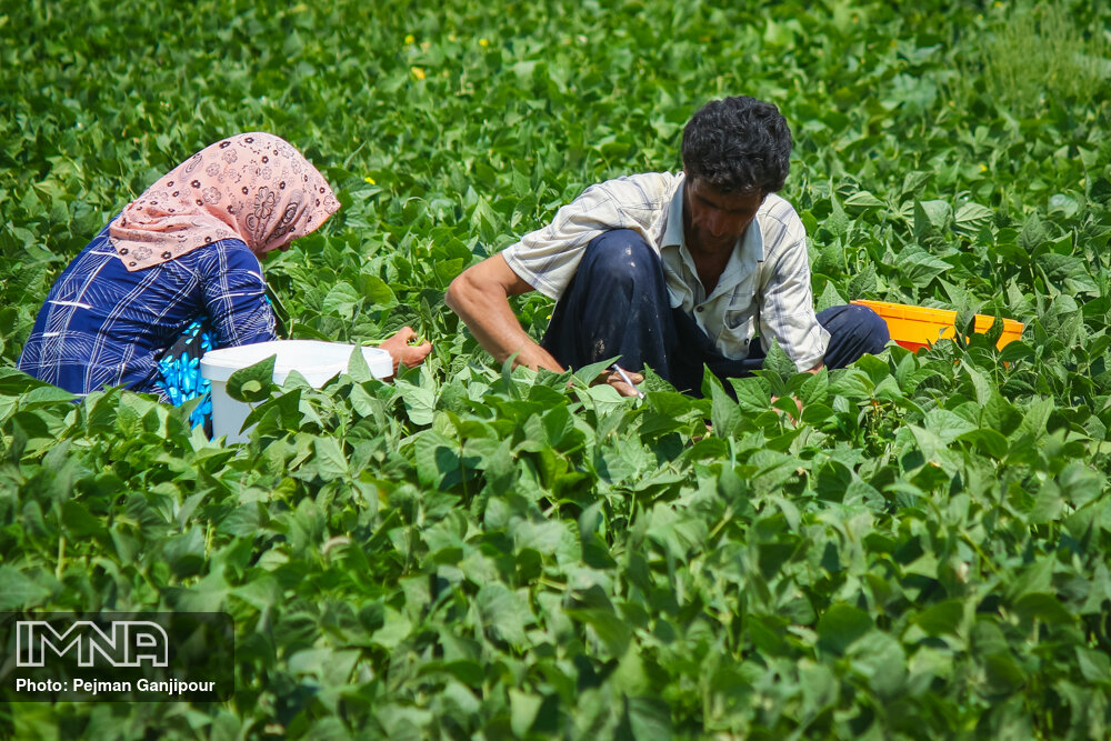 تجلیل از پنج نمونه بخش کشاورزی گلپایگان