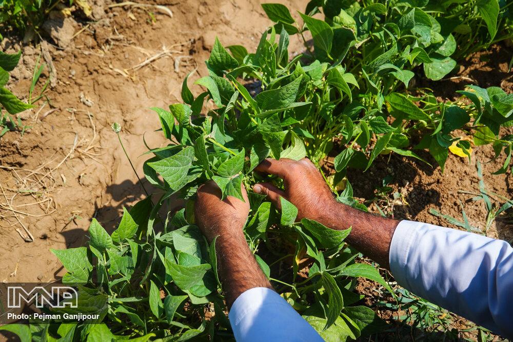 افزایش اهمیت بازارهای کشاورزی در دوران کرونا