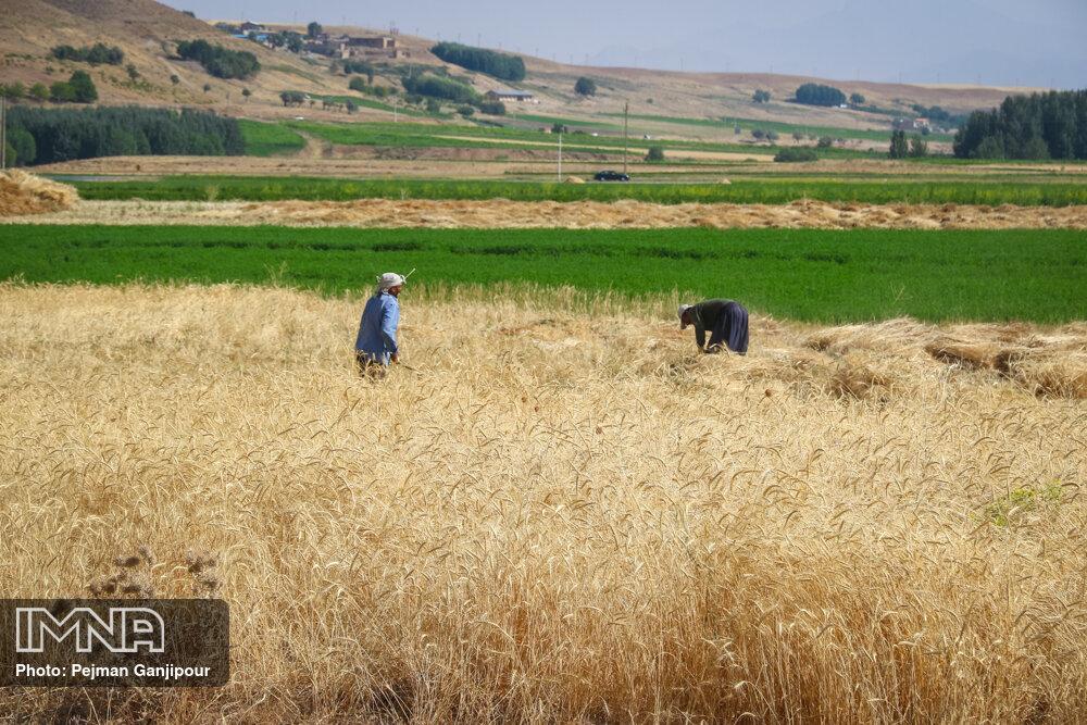 موافقت مجلس با کلیات طرح اصلاح قانون تضمین خرید محصولات کشاورزی