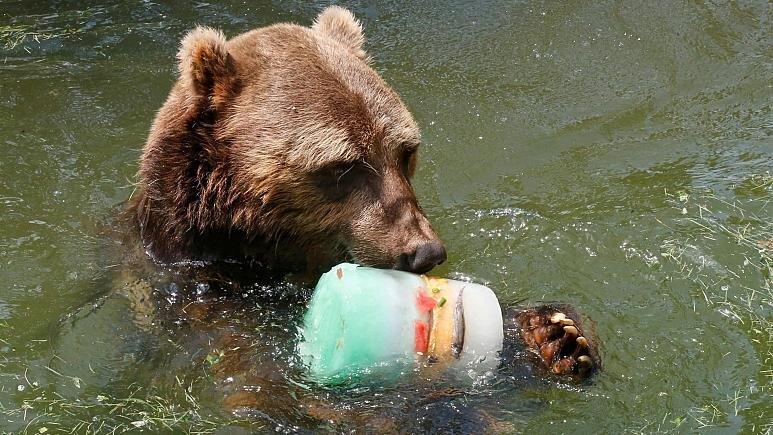 حیوانات باغ وحش دلتنگ بازدیدکنندگان