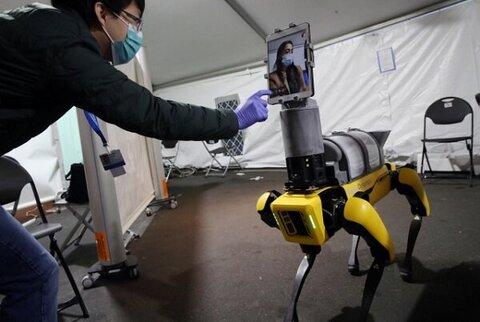 تشخیص کرونا با سگ روباتیک/تولید کوچکترین حافظه بی سیم دنیا