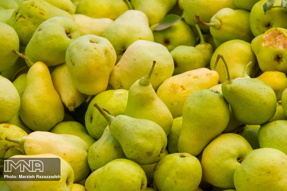 هفت میوه برای لاغری/ اگر معده درد دارید موز بخورید