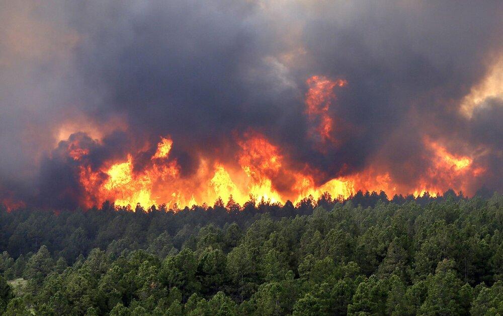نکات کاربردی برای کاهش خطرات آتشسوزی جنگلها در کشور