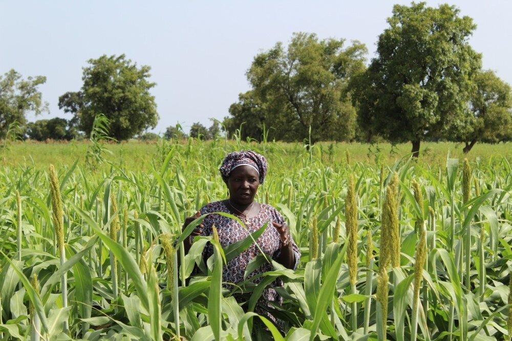 تأثیرات کوتاه و بلندمدت کرونا بر سیستم غذایی آفریقا
