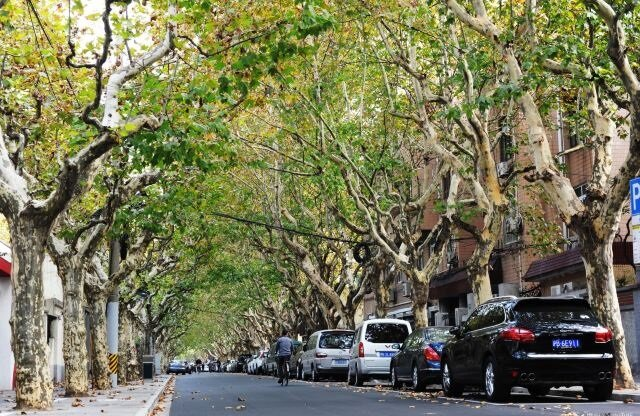 در این شهرها پیادهروی بهتر از ماشینسواری است