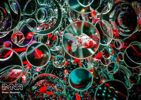 """ماهی های قرمز در یک مخزن آب مجهز به لنزهایی روی سطح یک اثر هنری با عنوان """"Reflecterium"""" در نمایشگاه Art Aquarium Museum 2020"""