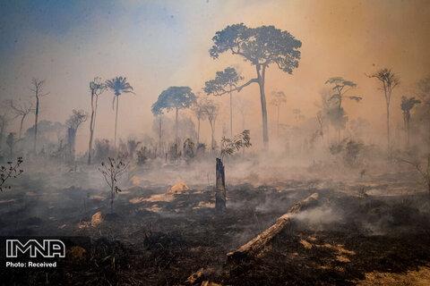 آتش سوزی در ایالت پارا ، برزیل
