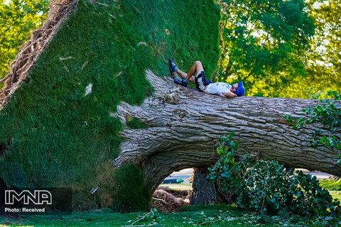 جوانی دو روز پس از طوفان در شهر یوتا بر روی یک درخت افتاده در سالت لیک سیتی دراز کشیده است