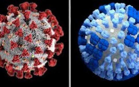 پاندمی ویروسهای کرونا و آنفلوآنزا در پاییز